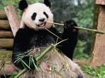 Edinburgh Zoo-Visit the only two giant pandas (Tian Tian and Yang Guang) in the UK. Bus 30mins