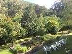 Overlooking the 20 acre garden at Brentwood B and B Apartments.