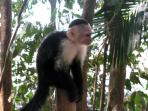 White face monkeys visit regularly but don't feed them as human touch can infect them