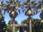 Coronado Palms Coastal Cottage - Pet Friendly