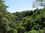beautiful view of the jungle foliage from the terrace; great for bird spotting!