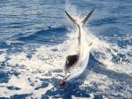 Deep Sea Fishing Charters from IOP Marina
