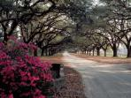 Boone Hall Plantation, 20 Minutes Away!