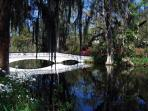 Visit the beautiful Magnolia Plantation 15min away