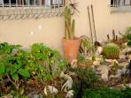 Indigenous garden and herbs