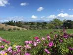 The Ranch has 7 acres of stunning views, gardens, lavender, flowers.
