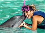 Swim with dolphins! We will organize it for you.