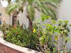 Lush plants around the pool area.