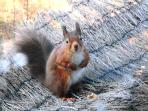 squirrel on picnic bench outside cottage