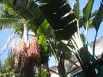 Tropical Plants in between Houses