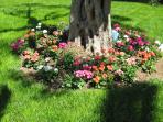 dettaglio giardino scrupolosamente curato