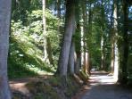 Promenade aux pieds des vieux hêtres, à 2 pas du gîte