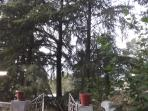 Deodar Trees in front of the property seen as you reach.