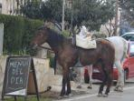 The horses aren´t on the menu!