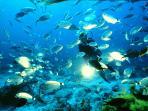 diving in Xlendi