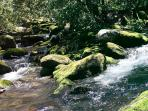One of our favorite picnic spots off the Motor Nature Trail that is just a couple of minutes away.