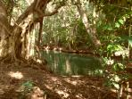Hodges River below the cottage just before it meets the sea. Wonderful mangroves along the edge.