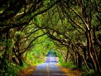 Explore the Red Road right outside of gate. Follow it down 5 minutes to the Ahalanui Hot Springs