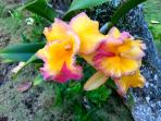 Find many different greeters daily in the gardens. Hawaii offers spectacular plants and flowers