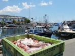 Always fresh fish in Puerto Mogan
