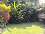 Luscious garden area