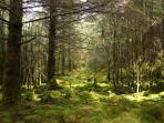 Local woodland.