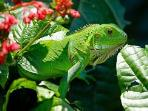 In the trees you find many types of birds. Let's not forget the iguana, Curacao's national symbol.