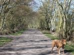 A five minute walk away is this secluded lane ideal for dog walkers, joggers or hikers.