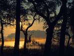 Sunrise through the Spanish Moss at the Retreat