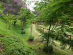 trekking through jungle and garden
