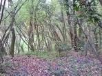 Woods near the house