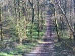 Lovely walks in the bluebell woods of Duncliffe (2 miles away)