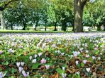 cyclamen n bloom