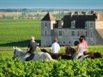 Rides on horseback in the vineyards of Burgundy