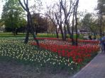 in center of Timisoara