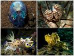Our underwater shots from Kubu/Tulamben