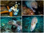 Some of our underwater shots from Kubu/Tulamben