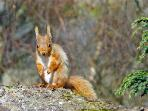 Red squirrels can often be seen on the local walks and in the garden at the Mill