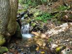 Noisy Creek meanders along side the Cabin & trail to Waterfalls!