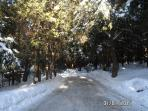 Private 'Enchanted Forest' in the winter