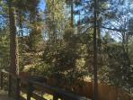 Views of the tall pines from the back deck.