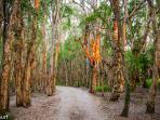 Paper Bark forest - North Valla Beach