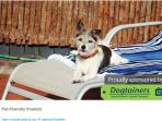 We are Pet friendly and have been a finalist in Pet friendly awards