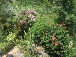 Garden below apartment full of trees, shrubs, fruit, birds - free to explore