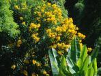 Casa Tambor full of lovely, colorful plants.