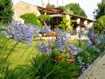 Les Agapanthes fleurissent le jardin à la belle saison.