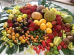 Enjoy Fresh Fruit from our Property Year-round