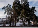 La foresta confinante con il giardino della villa