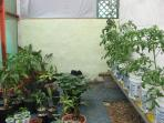 hydroponics and seedlings that have to be planted in the garden if they are a little bigger.