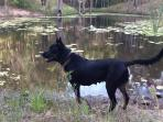 Pets welcome and enjoy a walk on the 30 acre property.